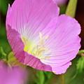 Pretty In Pink by Debbie Karnes