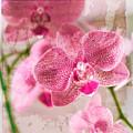 Pretty In Pink by Pamela Ellis