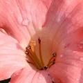 Pretty Pink by Martina Fagan