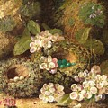 Primroses And Bird's Nests On A Mossy Bank by Oliver Clare