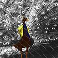 Proud As A Peacock  by Al Bourassa