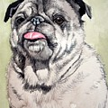 Pug by Christopher Shellhammer