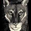 Puma by Mike Hinojosa