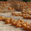 Pumpkins On Bales by Carol Groenen