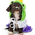 Puppy Frog Prince by Susan Schmitz