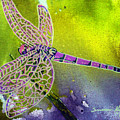 Purple Dragonfly by Susan Kubes