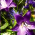 Purple Dream by Ricky Barnard
