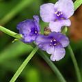 Purple Flower by Marty Koch