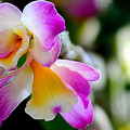 Purple Flower by Patrick  Short