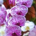 Purple Flower by Ralph Liebstein