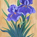 Purple Iris by Ruth  Housley