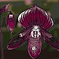 Purple Orchid Woodcut by Ann Tracy