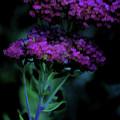Purple Passion by Bonnie Bruno