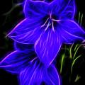 Purple Passion by Joann Copeland-Paul