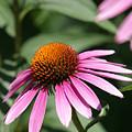 Purple Petals by Alan Look