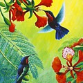 Purple-throated Caribs And Flamboyant by Christopher Cox