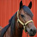 Quarter Horse by Sandy Keeton