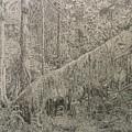 Rain Forest by Dan Hausel