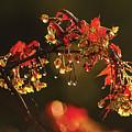 Rain Soaked Leaves-1 by Steve Somerville