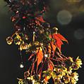 Rain Soaked Leaves-3 by Steve Somerville