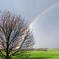 Rainbow by Martie DAndrea
