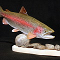 Rainbow Trout On The Rocks by Eric Knowlton