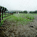 Raincatcher Web by Susan Baker