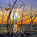 Raising Branches by Munir Alawi