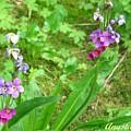 Rare Parry Primrose Spring Inlet Trampas Lake Nm by Anastasia Savage Ealy