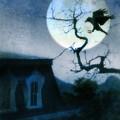 Raven Landing On Branch In Moonlight by Jill Battaglia