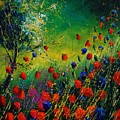 Red And Blue Poppies 67 1524 by Pol Ledent