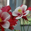 Red And White Flower by Mark Platt