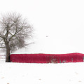 Red Barn In Winter by Tamyra Ayles