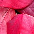 Red  by Beth Akerman