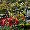 Red Bridge & Japanese Lantern, Autumn by The Irish Image Collection