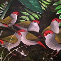 Red-browed Finch Flock Weipa by Una  Miller