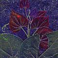 Red Bud by Richard McRee