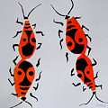 Red Bugs by Vitali Komarov