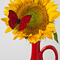 Red Butterfly On Sunflower On Red Pitcher by Garry Gay
