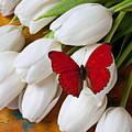 Red Butterfly On White Tulips by Garry Gay