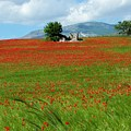 Red Fields by Judy Kirouac