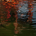 Red Fishes In A Pond Pictorial II by Stefania Levi