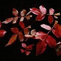 Red Leaves by Jeffrey Kolker