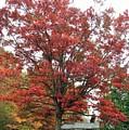 Red Oak 2 by Susan Jenkins