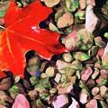 Red On The Rocks by Jeffrey Kolker