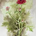 Red Ranunculus by Kathryn Donatelli