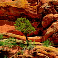 Red Rocks  Colorado by Patrick  Short