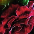 Red Rose by Madeline  Allen - SmudgeArt