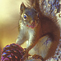 Red Squirrel With Pine Cone by Gary Beeler