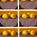 Redundant Lemons by Donelli  DiMaria